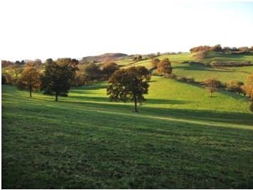 rural 1.jpg
