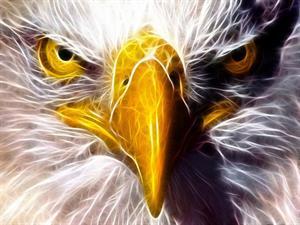 Latest Market Comment – Eagle-eyed