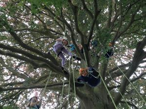 Out and About: Let's Go Climb a Tree