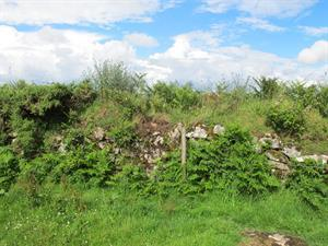 Countryside Stewardship Capital Grant Scheme for Hedgerows and Boundaries