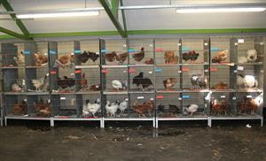 Final Poultry and Sundry Sale for 2018 - Saturday 27th October 2018